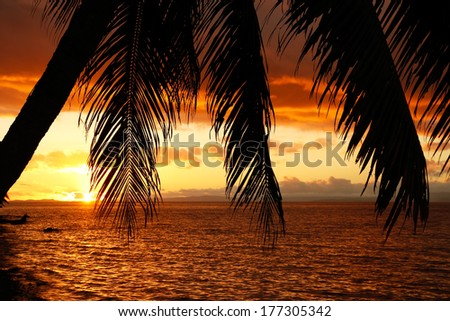 Silhouetted palm tree on a beach, Vanua Levu island, Fiji, South Pacific - stock photo