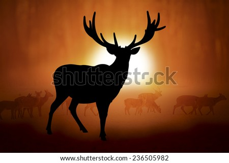 Silhouettes deer against the sunset in meadow - stock photo