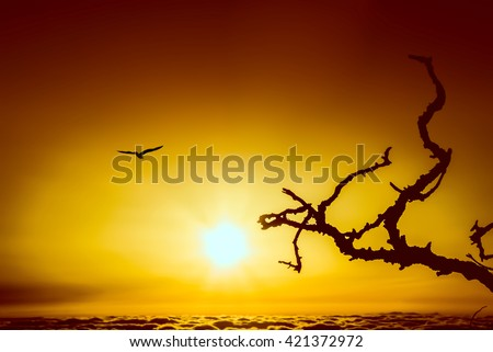 Silhouettes of a seagull on the fly and branches at dawn