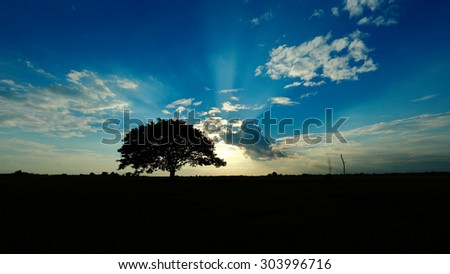 Silhouettes of a tree in the paddle field. Rice is very important agriculture in Thailand. - stock photo