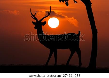 Silhouettes of deer on orange sunset  gold skyline background Wild life landscape - stock photo