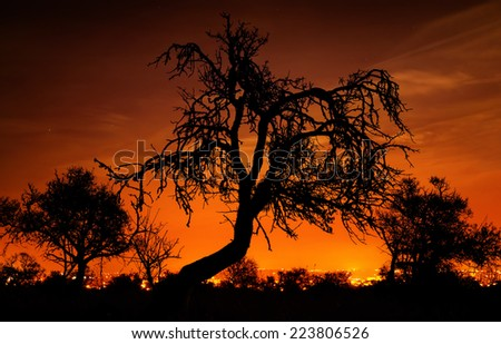 Silhouettes of distinctive bare trees in front of an amazingly glowing orange night sky
