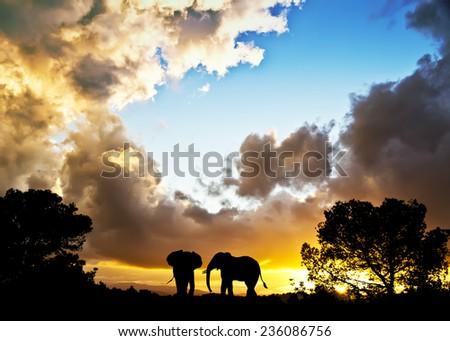 silhouettes of elephants through the trees - stock photo