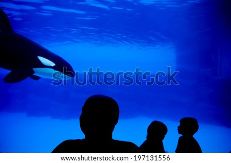 Silhouettes of people watching an orca at an aquarium. - stock photo
