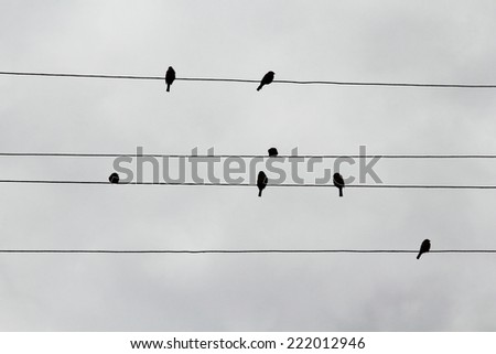 Silhouettes of sparrows on electric wires looking like musical notes - stock photo