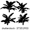 Silhouettes of the banana tree  on a white background.  3D art-illustration. - stock photo