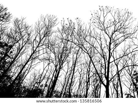 silhouettes of the trees - stock photo