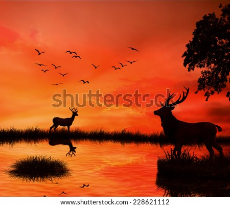 Silhouettes of two deers with stag horns with reflection in lake water against orange sunset dusk sky skyline background with flying birds. Wild life landscape scene screen saver  - stock photo