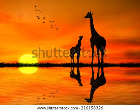 Silhouettes of two giraffes with reflection in lake water against African sunset  - stock photo