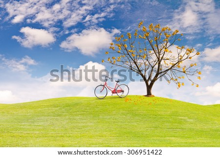 Silk Cotton flower tree
