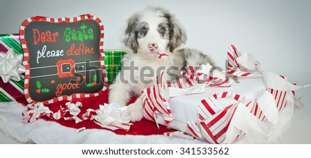 "Silly Aussie Doodle puppy laying next to a sign that reads ""Dear Santa, please define good"" as he is ripping a Christmas gift open, with a guilty look on his face. - stock photo"
