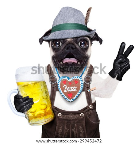silly crazy  pug dog dressed up as bavarian with gingerbread as collar, isolated on white background, and victory or peace fingers, surprised or shocked, with beer