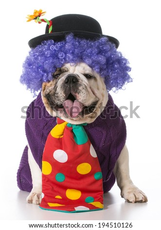 silly dog wearing clown costume on white background - stock photo