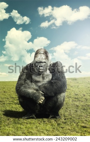 Silver backed Male Gorilla on a background of grass and sky. mounted and edited image.