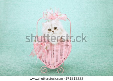 Silver Chinchilla kitten sitting inside pink heart shaped basket decorated with pink bows on light green background  - stock photo