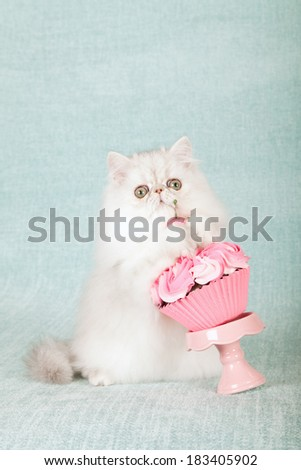 Silver Chinchilla kitten with giant cupcake on pink cupcake stand on light blue green background  - stock photo