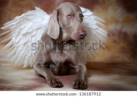 Silver dog with angel�´s wings - stock photo