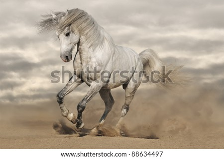 Silver gray Andalusian horse in desert. Toned image - stock photo