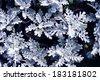 Silver Leaf Cineraria - stock photo