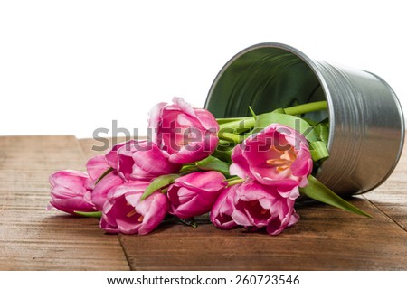 Silver metal container of fresh cut tulips - stock photo