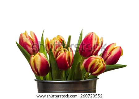 Silver metal container of fresh cut tulips