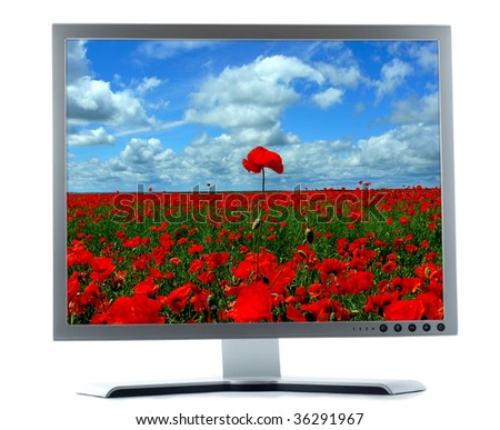 silver monitor with red poppies on a white background - stock photo