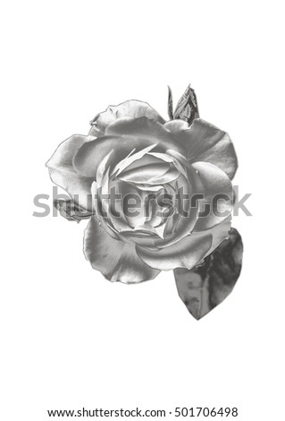 Silver Rose On A White Background