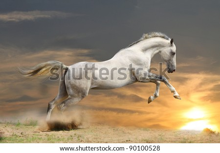 silver-white stallion in sunset - stock photo
