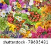 Simple collage mix  imagination from bright summers flowers and berries background - stock photo