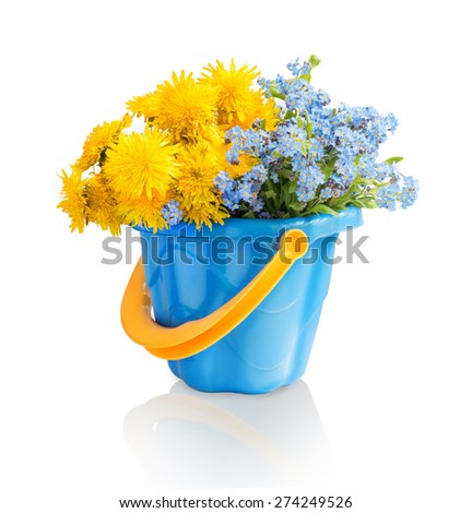 Simple cute lush corsage of vivid ocher fluffy blowballs and delicate cyan forgetme in children toy plastic bucket isolated on white backdrop with clipping path. View close-up with space for text - stock photo
