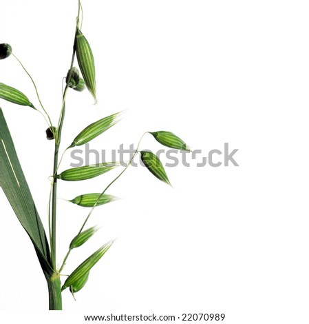 simple flora against white background