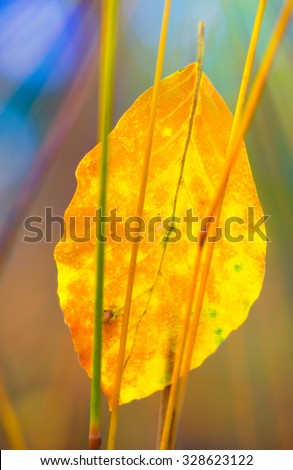 simple leaf in autumn forest - stock photo
