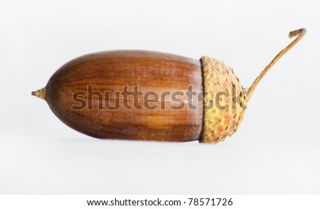 Simple macro image of an acorn isolated on white. - stock photo