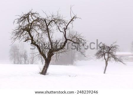 Simple, minimal winter landscape in Slovenia - stock photo