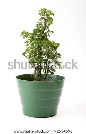 simple plastic pot on white background, green image - stock photo