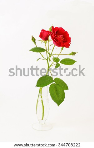 Simple red rose bloom and buds in clear crystal bud vase against plain background.  Artistic still life on white background with copy space  - stock photo