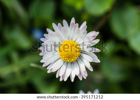 Simple tender camomile