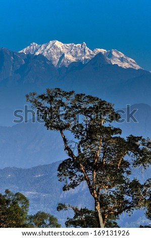 Singalila Ridge of Kanchenjunga mountain range in the morning, big tree in foreground, view from Silerygaon Village, Sikkim - stock photo