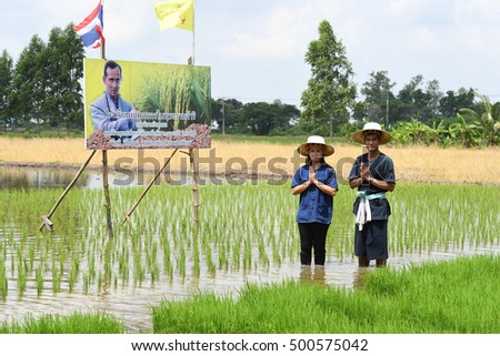 SINGBURI - THAILAND 18 : Farmers planting rice by demonstrating sufficient economy like Kings and Thailand show their loyalty to The monarchy at Bangrachan on October 18, 2016 in Singburi, Thailand.