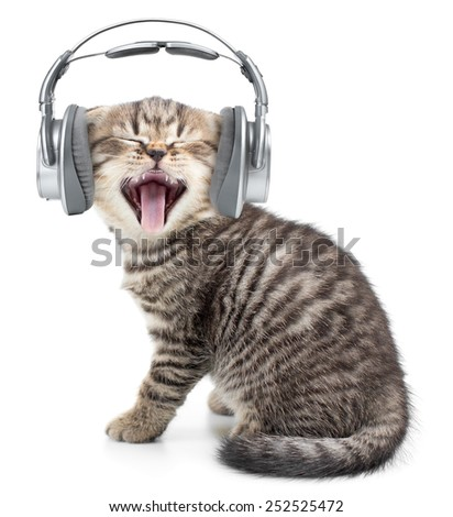 Singing funny cat or kitten in headphones listening music - stock photo