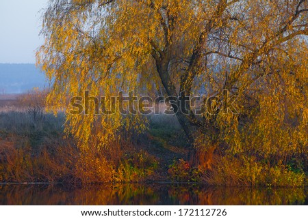 Single autumn tree - stock photo