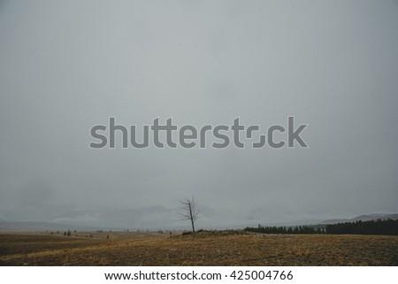 Single autumn tree on a hill in landscape. Altai Region, Siberia, Russia - stock photo