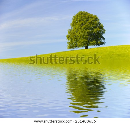 single big old tree mirroring on water surface - stock photo