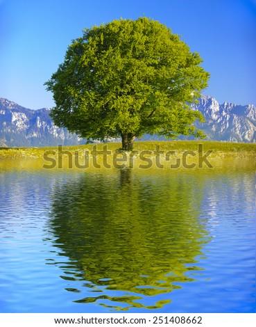single big old tree mirroring on water surface - stock photo