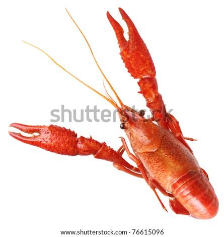 Single big red boiled crawfish - stock photo