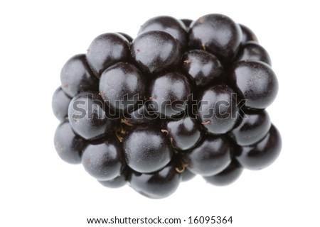Single blackberry fruit isolated against white background - stock photo