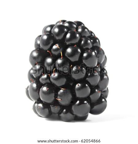 Single blackberry isolated on a white background - stock photo