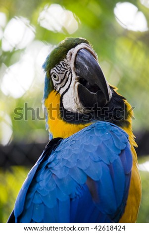 Single blue and gold macaw parrot in zoo