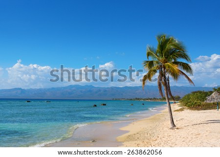 Single coconut palm tree on the beach with sun - stock photo