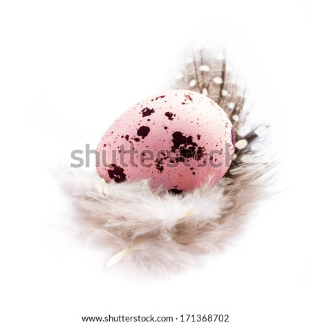 Single Colorful Quail egg with a  feather isolated on white background, closeup. Colored spotted quail egg.